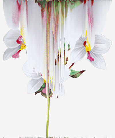 Andrea Wolf, 'Agrostophyllum Philippinense, var. 021', 2020