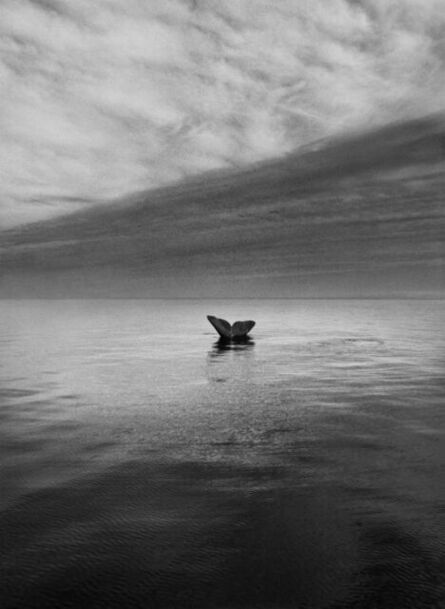 Sebastião Salgado, 'Genesis: Southern Right Whale Tail, Valdés Peninsula, Argentina', 2004