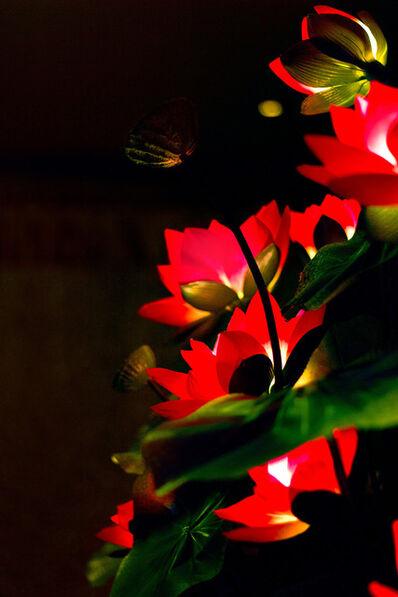 Lana Z Caplan, 'Lotus Lamp', 2013