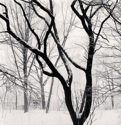 Michael Kenna, 'Kawayu Forest, Study 3, Hokkaido, Japan', 2014