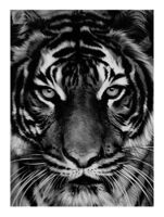 Robert Longo, 'Untitled (Tiger)', 2011