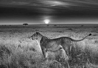 David Yarrow, 'Serengeti', 2016