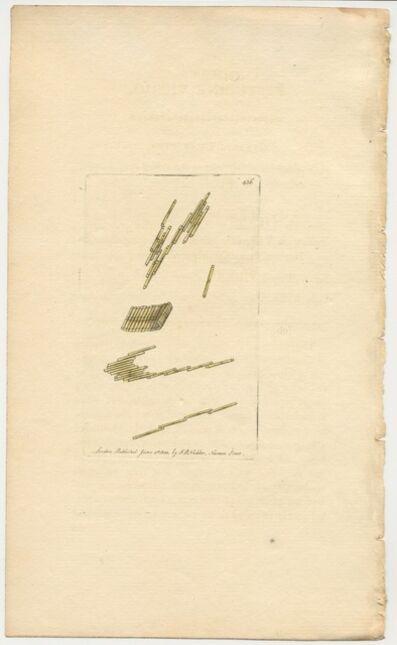 Frederick Polydore Nodder, 'Plate 436: The Festucine Vibrio', 1800