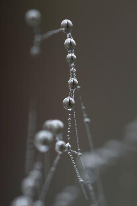 Kim Westcott, 'Web #1', 2015