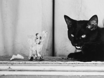 Katy Grannan, 'San Gabriel and the Black Cat, Modesto, CA', 2017