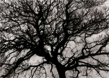 Robert Longo, 'Study of Tree November', 2017