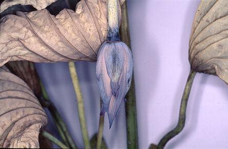 "Nobuyoshi Araki, '""Flower Rondeau"", 1997/2020', Printed 2019"