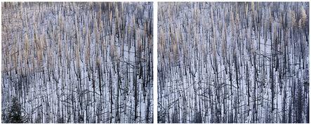 Laura McPhee, 'Dollarhide Mountain, Above Warm Springs Creek, Blaine County, ID (Diptych) 1/5'