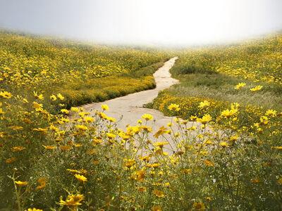 Liat Elbling, 'Chrysanthemums', 2009