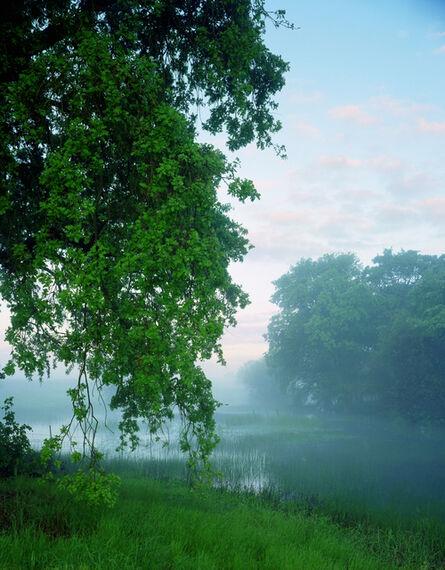 Karen Halverson, 'Valley Oak', 2000