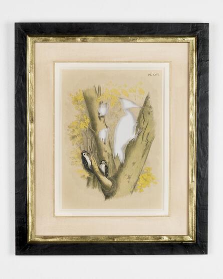 Brandon Ballengée, 'RIP Ivory-Billed Woodpecker: After Theodore Jasper', 1881/2015