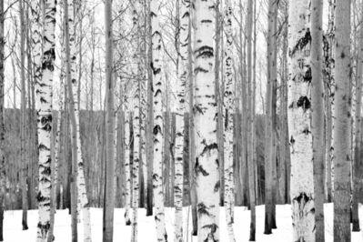 Matthew Webb, 'Forests (Listvyanka, Siberia, Russia)', 2013