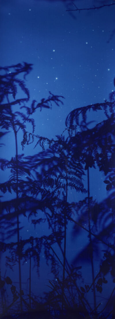 Susan Derges, 'Star Field Bracken', 2003