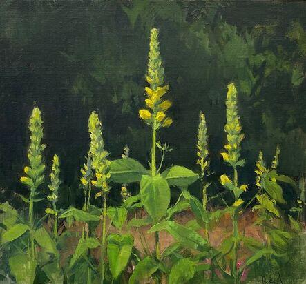 Jeffrey Reed, 'Bartram's Perennials', 2021