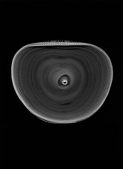 Susana Reisman, 'Measuring Tape 13', 2005