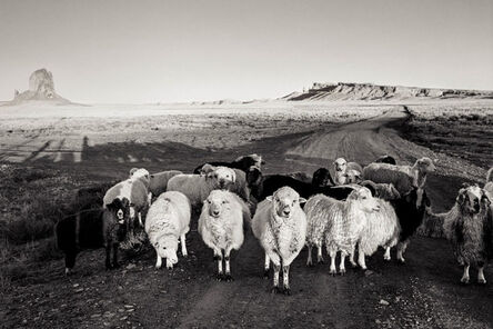 Joan Myers, 'Monument Valley Sheep, Utah', 1979