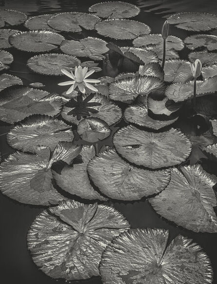 James Chung 鍾文略, 'Water Lily', 1957