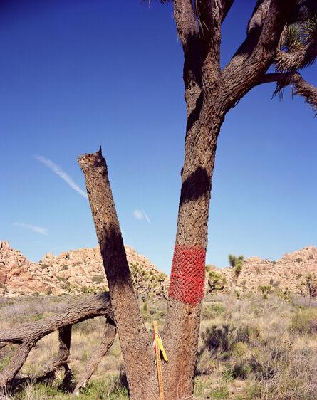 Karen Halverson, 'Joshua Tree', 2001