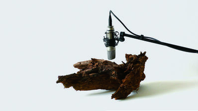 Zimoun, '25 woodworms, wood, microphone, sound system', 2009