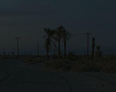 Ron Jude, 'Dark Palms', 2014