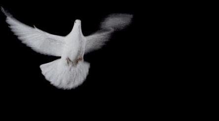Eva Koch, 'White Doves', 2016