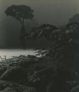Bill Brandt, 'Frost Morning In the Park, Chiswick House Gardens'