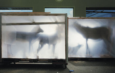 Richard Barnes, 'Backlit Hoofed Animals', 2005
