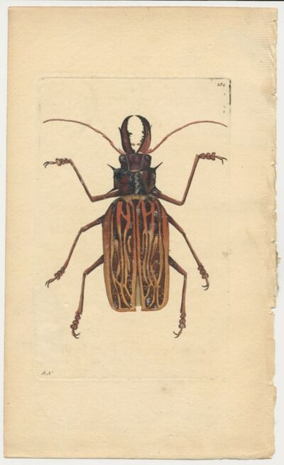 Frederick Polydore Nodder, 'Plate 284: The Stag-Horned Cerambyx', ca. 1795