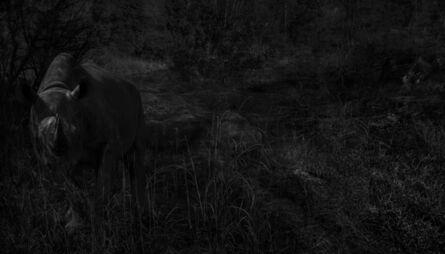 Toru Tanno, '†rhinoceros', 2014