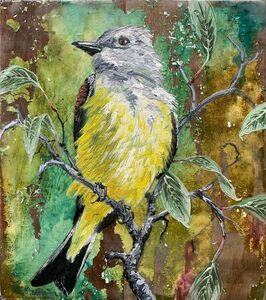 Christopher Reilly, 'Cassin's Kingbird', 2020