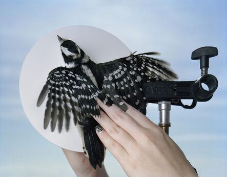 Yola Monakhov Stockton, 'Untitled. Downy Woodpecker. Manomet, Massachusetts', 2011