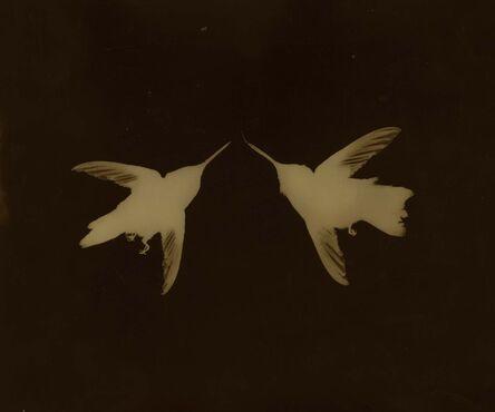 Kate Breakey, 'Pair of Hummingbirds'