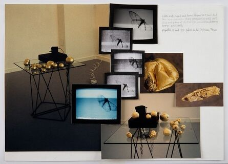 Shelagh Wakely, 'Papillon de Nuit', 1993