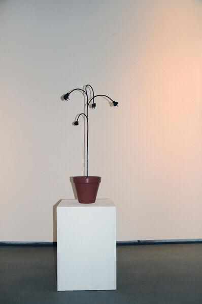 Markus Hofer, 'Steckpalme'
