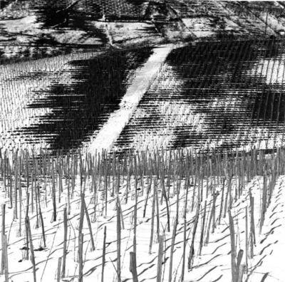 János Szász, 'Spring is here (Tavaszodik)', ca. 1964