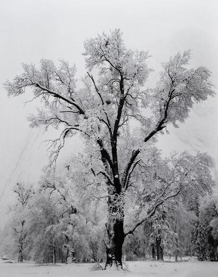 Ansel Adams, 'Oak Tree, Snow Storm, Yosemite National Park, California', 1948