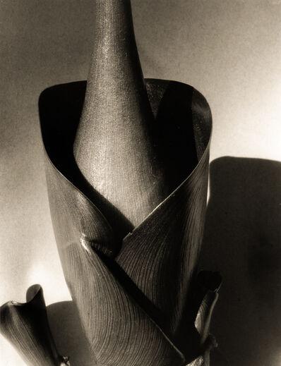 Imogen Cunningham, 'Water Hyacinth, 1920s', 2001