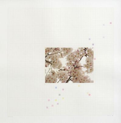 Darren Almond, 'Sakura Chart #0.01', 2006