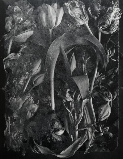 John Blakemore, 'Tulipa, The Generations No. 15', 1994