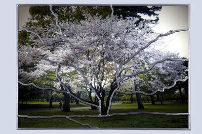 Sarkis, 'Cerisier à Beppu (V15)', 2011