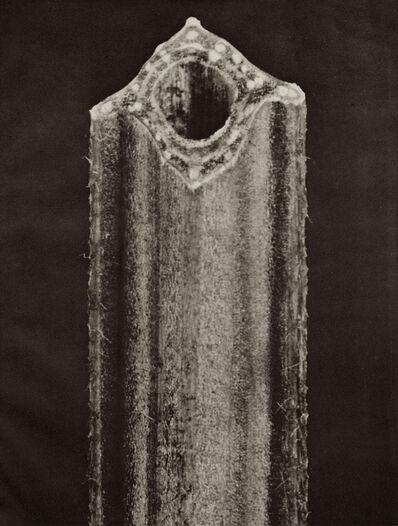 Karl Blossfeldt, 'Plate 120 - Vicia Faba, Broad Bean, Section of stem '