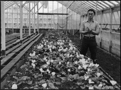 Dorothea Lange, 'Greenhouse, San Francisco', 1942