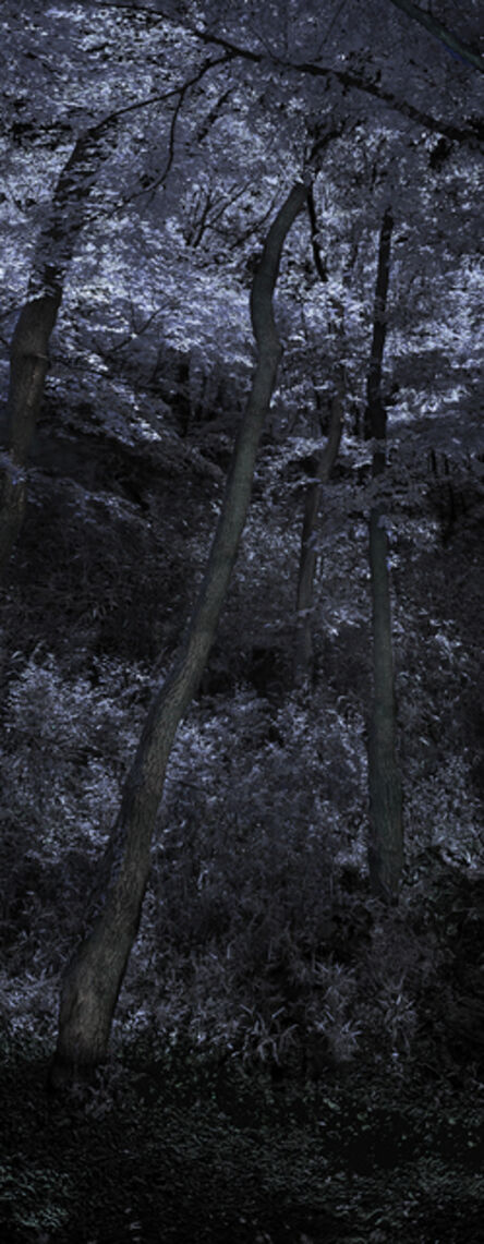 Wonjae Sou, 'Guardian Tree #3, Hyangrim Temple', 2017