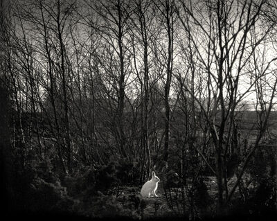 Pentti Sammallahti, 'Signilskär, Finland (white rabbit in forest)', 1974