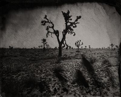 Eric Overton, 'Joshua Tree ', 2016