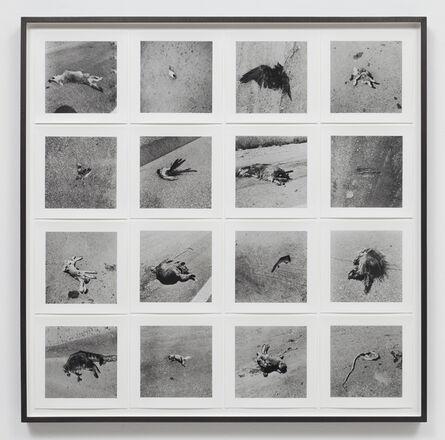 Robert Kinmont, '26 Dead Animals', 1967-1970/2011