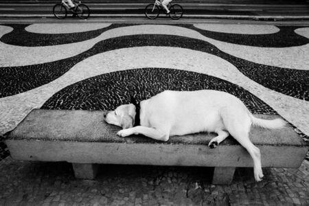 Kitty Paranaguá, 'Untitled', 2002/11