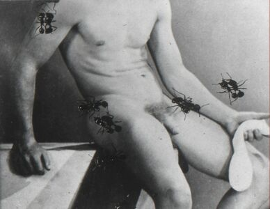 David Wojnarowicz, 'Untitled from the Ant Series (desire)', 1988-1989