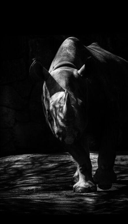 Toru Tanno, 'BLACK †rhinoceros', 2014