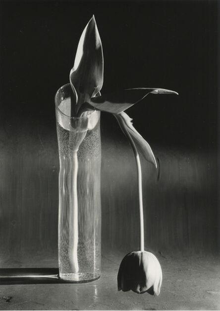 André Kertész, 'Melancholic Tulip', 1939